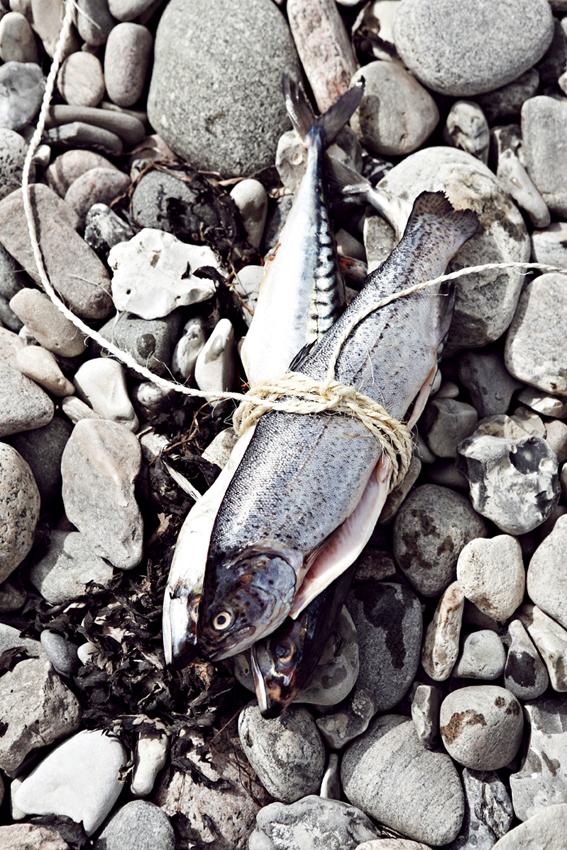 fisk på sten
