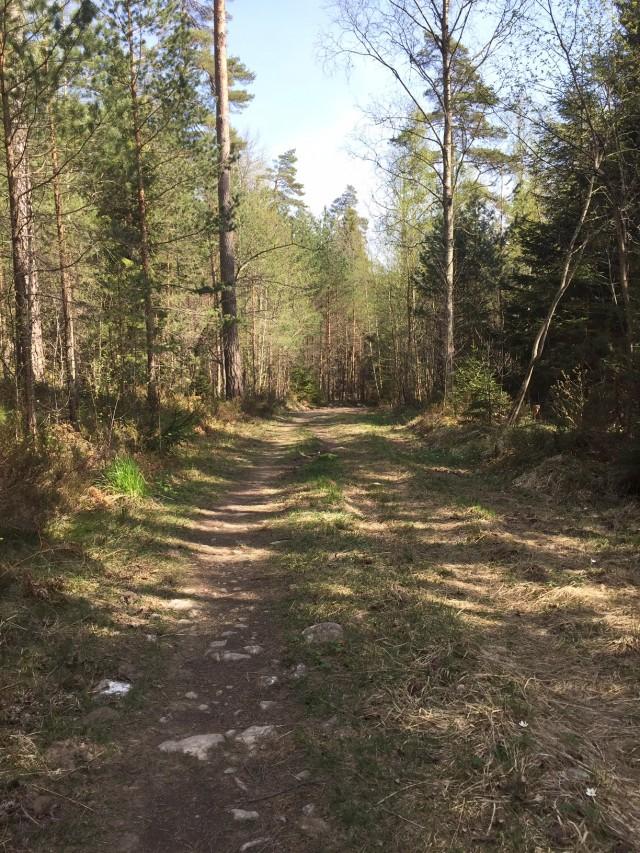 160508 Löpning stig