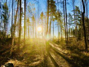 Morgonpromenad i skogen och promenadmöten